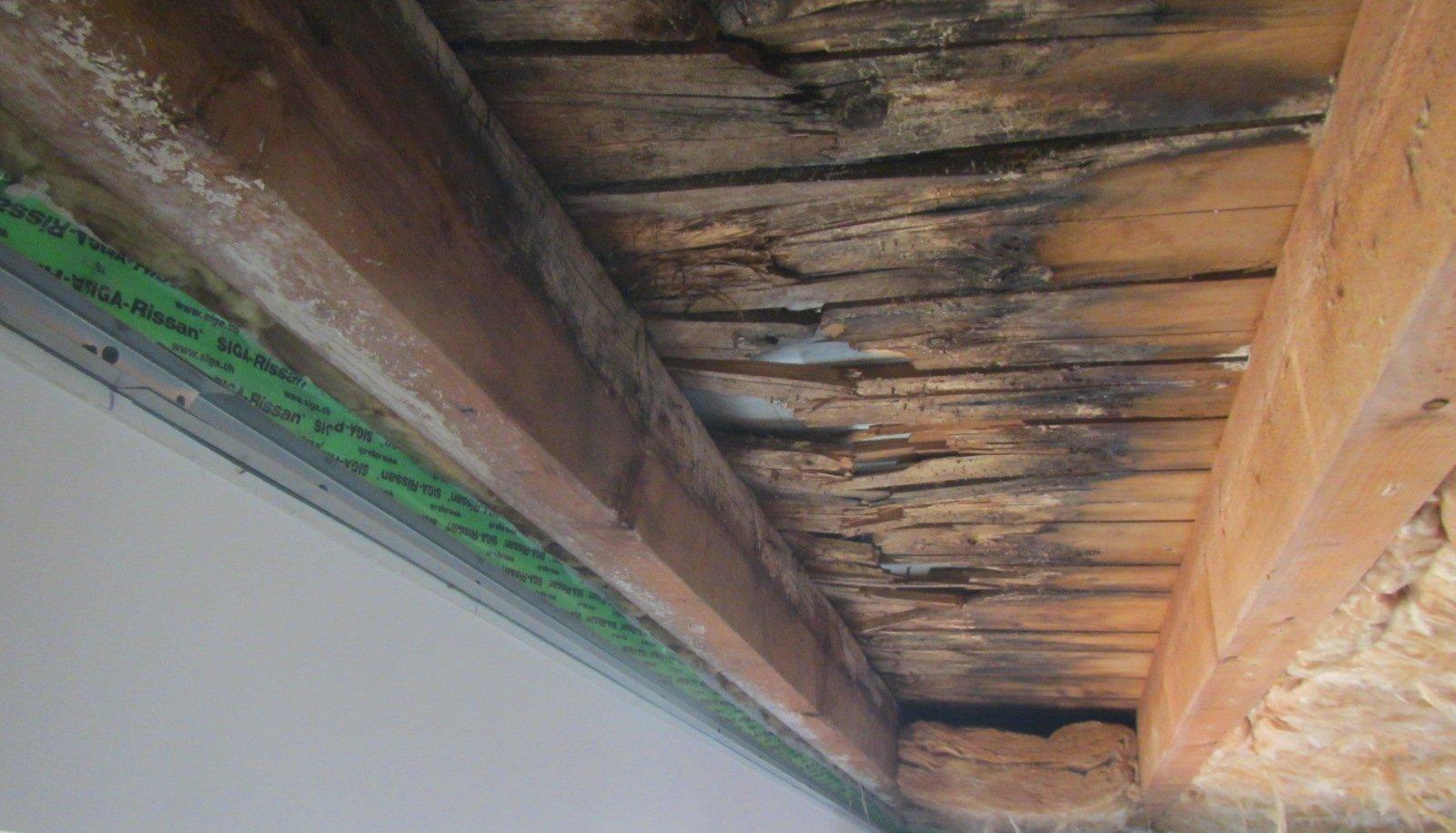 Holzflachdach-unten Schaden durch Pilzbefall an Sparren und Dachschalung
